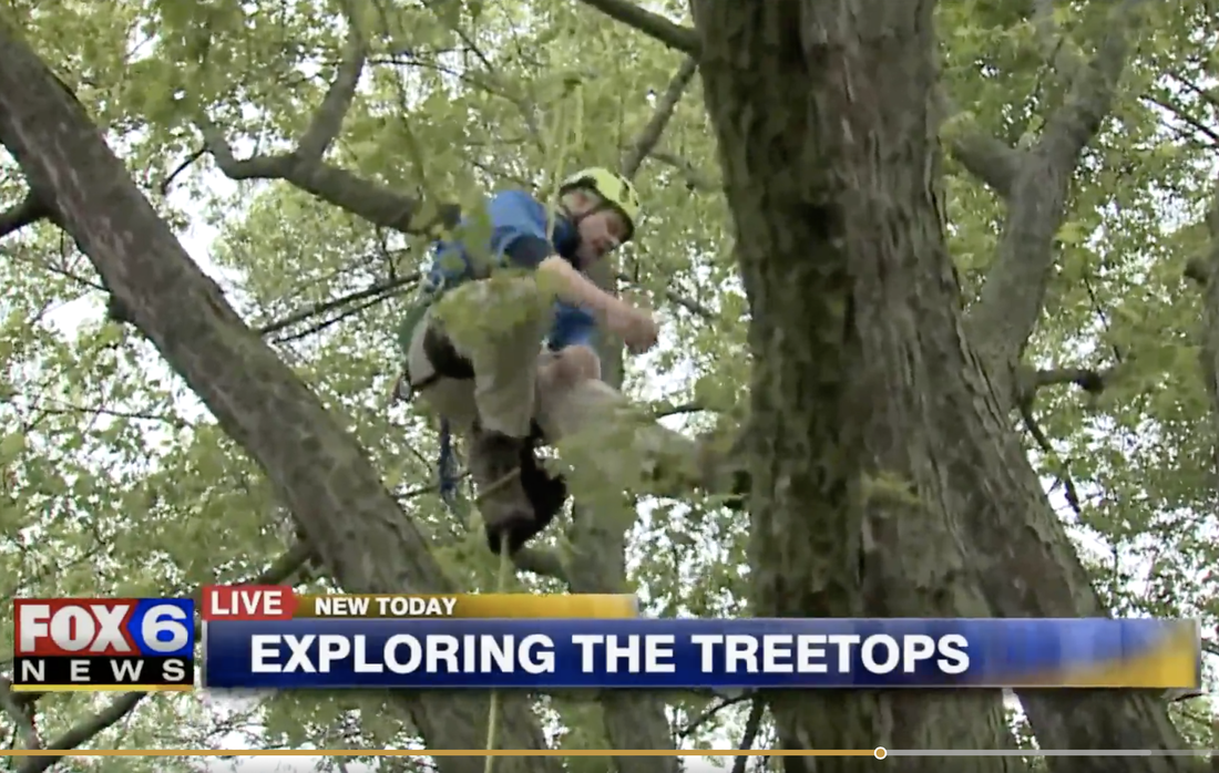 What is Recreational Tree Climbing - TREETOP EXPLORER